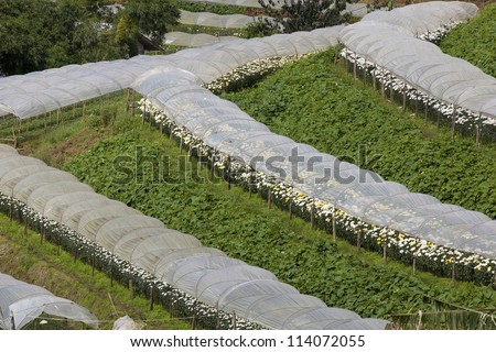 rows of seedlings grow in a greenhouse