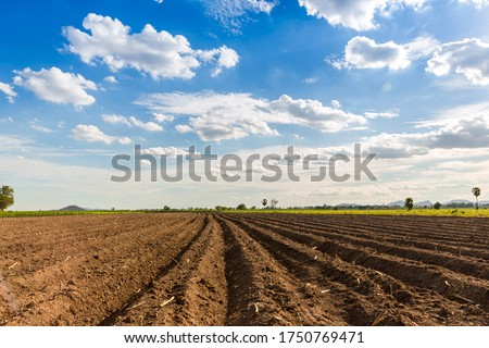 Rows of soil before planting. Furrows row pattern in a plowed field prepared for planting crops in spring. view of land prepared for planting and cultivating the crop. Foto stock ©