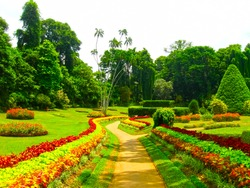 Royal Botanical garden Peradeniya. Sri Lanka