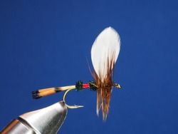 Royal Coachman Fly