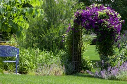 royal purple jackamani is the focal point of this impressionistic garden