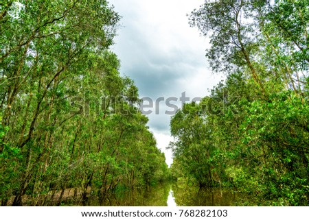 Photo of Royalty high quality free stock image aerial view of  Melaleuca forests, Tram Chim National Parks, Dong Thap, Vietnam.