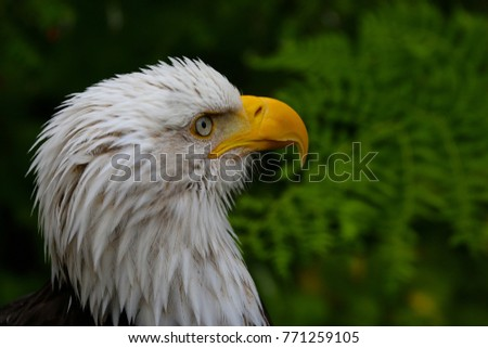 Royalty high quality free stock image of Eagle\n