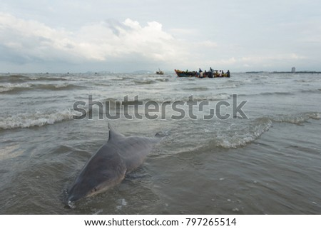 Stock Photo Royalty high quality free stock image of shark on the beach and fishing boats in Long Hai beach, Vietnam. People catch sharks for fins