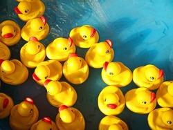 rubber ducks in a children's pool