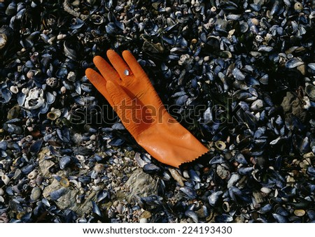 Rubber glove discarded on shell covered beach
