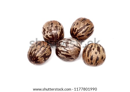 Rubber seed, Rubber tapper. Rubber seeds isolated on white background #1177801990