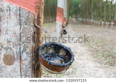 Rubber tapping.rubber plantation.Rubber industry. #1320597125