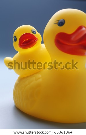 Rubber yellow duck isolated on coloured background.
