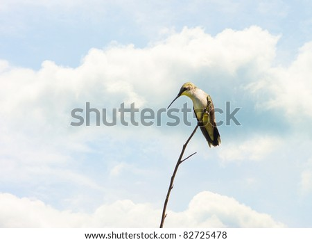 Ruby throated hummingbird perched on a branch against a blue and cloudy sky with copy space.