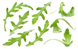 Ruccola leaf isolated on white background, single green arugula leaves collection