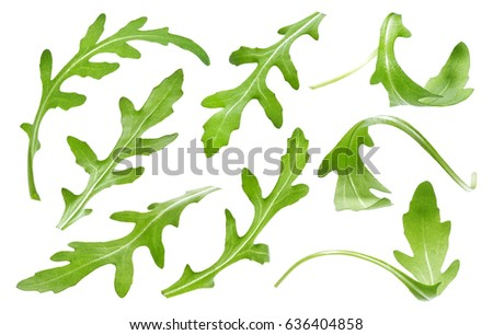 Ruccola leaf isolated on white background, single green arugula leaves collection Сток-фото ©