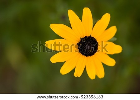 Free photos orange flower with long thin petals and yellow center rudbeckia fulgida the orange coneflower or perennial coneflower species of flowering plant in the mightylinksfo