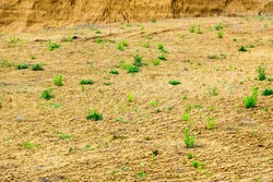 Rugged dry sandy clay surface of the earth with green bushes