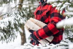Rugged man in plaid jacket carrying birch logs in the snow