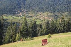 Rugova valley in Kosovo (Gryka e Rugoves)