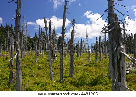 ruined forest (damaged by frosty wind) and blue sky with clouds - czech republic