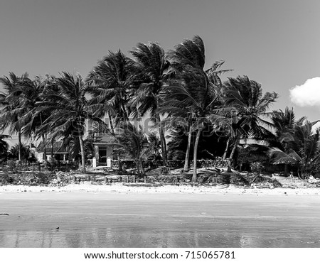 Ruined Houses Hurricane in Floods Natural Disaster jungle island sea landscape with palm trees in b&w