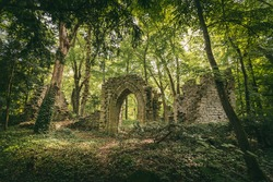Ruins in the forest surrounded by trees
