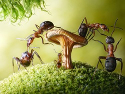 run, baby! forest robbers formica rufa and baby myrmica admiring mushroom, ant tales