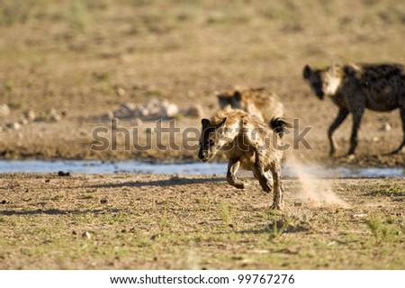 Run Spot RUN !!!!