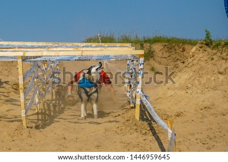 Run the owner of the dog and overcoming obstacles combined efforts. Animal and human - almost one