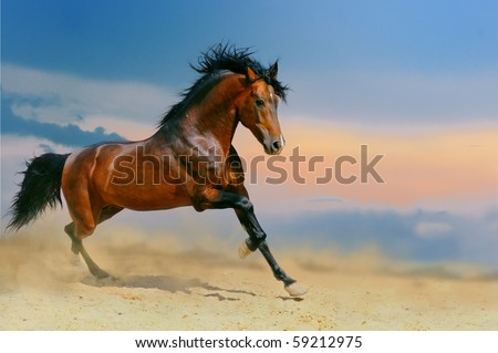 Running bay horse in the desert #59212975