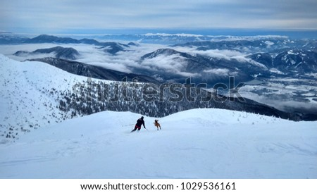 Running dog for the skier