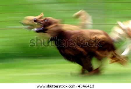 Running Dog, motion blur