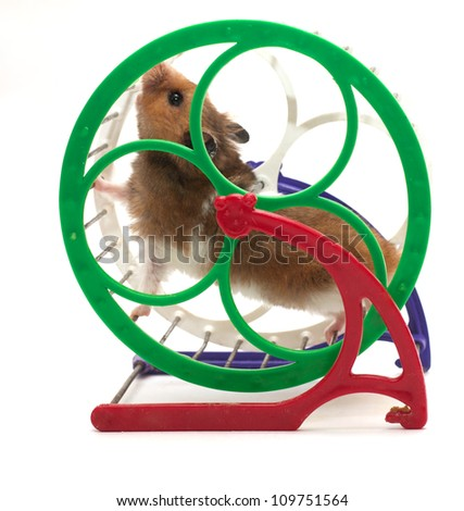 running hamster on white background