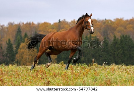 Running horse and autumn landscape
