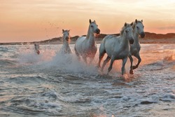 Running horses on water
