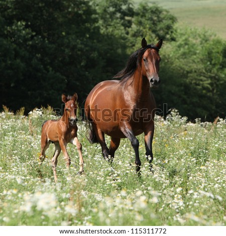 Running mare with foal