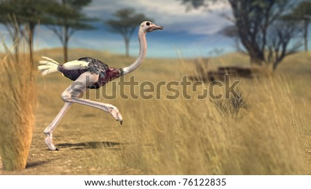 running strauss