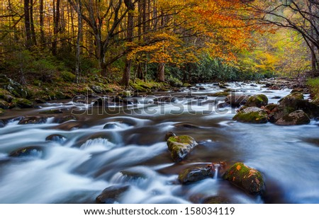Running stream with beautiful autumn colors, the great smokey mountains national park