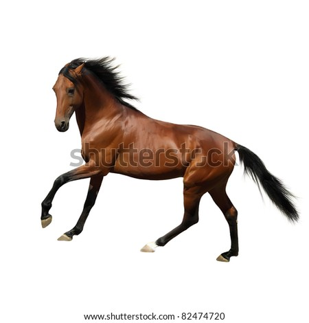 Rur - beautiful Russian trotter, prize winner of the St. Petersburg International Horse Exhibition Hipposphere. Isolated on white.