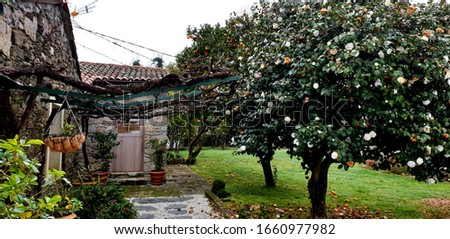 Rural architecture with different trees, magnolia, orange and lemon tree in Paderne, Galicia by Fermín Tamames Stok fotoğraf ©