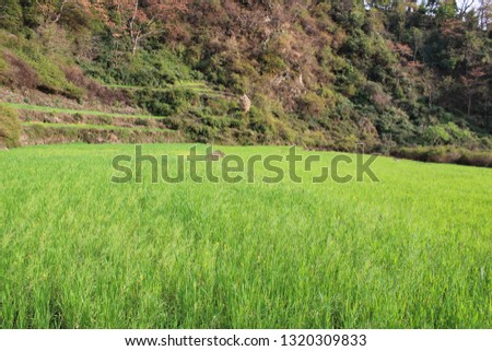 Rural areas of Uttrakhand India #1320309833