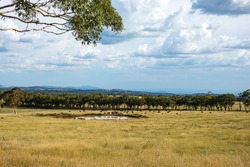 Rural Australian landscape with cattle and storm clouds