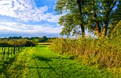 Rural country farm land scene. Farm fence view. Rural farm grass land scene. Rural farmland scene