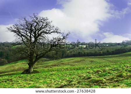 Rural countryside setting with bare tree overlooking forests in the distance.Taken on Dundry, Bristol.