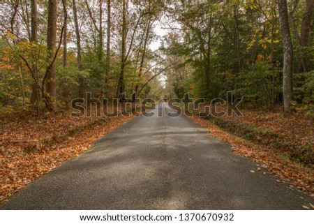 Rural dirt trail leading towards a forest. Picture taken in Suffolk, Virginia, November 2018.