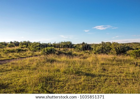 Rural dry bush and grassland with blue cloudy skyline landscape in South Africa