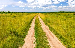 Rural field road scene. Summer rural road. Rural road landscape