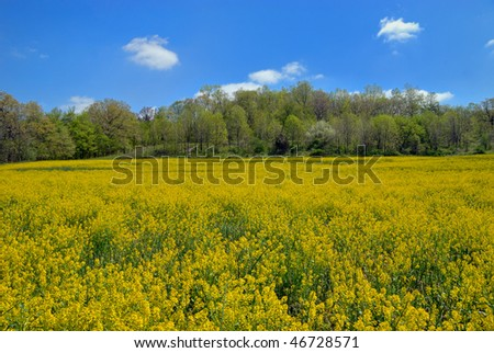 Rural Field with Yellow Flowers #46728571