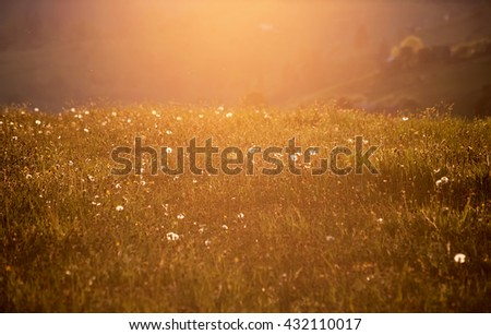 rural floral field on sunset. natural summer background #432110017