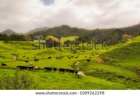 Rural Gisborne countrside