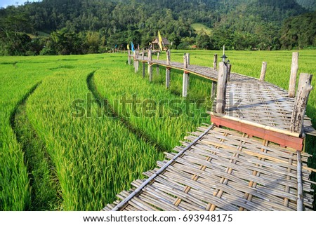 Shutterstock Rural Green rice fields and bamboo bridge in Pai , Mae Hong Son province.