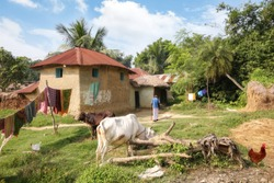 Rural Indian village at Bolpur West Bengal with view of mud hut with unpaved village road and cow grazing in the field