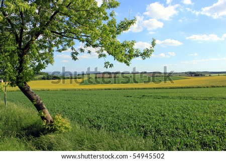 rural landscape and tree